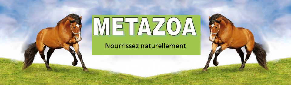 Metazoa-europe